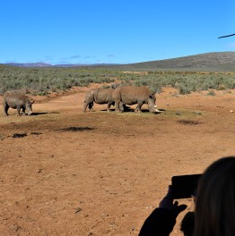 Encounter the animals of this Private Game Reserve