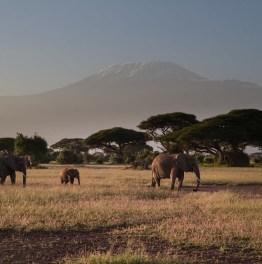 Safari tour of Kenya