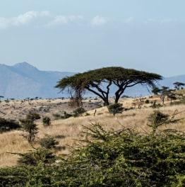 Spot the wildlife across diverse Landscapes