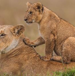 Tanzania & Zanzibar Safari