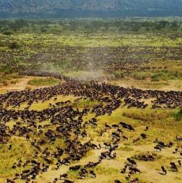Kenya Tanzania Combined Budget Safari