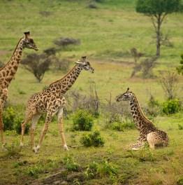Full-Day Walking Safari in Arusha National Park