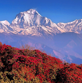 5-Day Trek to Poon Hill from Pokhara
