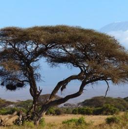Push to the Summit Via Marangu Route