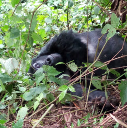 Go for an adventure in the forests of Uganda