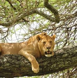 3-Day Tarangire, Ngorongoro and Lake Manyara Camping Safari