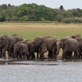 Discover Sri Lanka like never before