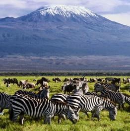 12-Day Kenya And Tanzania Wildlife Safari from Nairobi