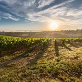Taste Delicious Wines of Thracian Valley