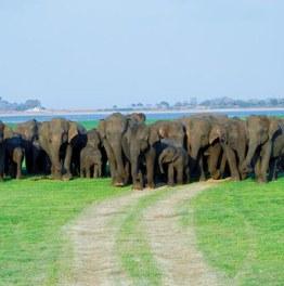 Wander around to explore the wonders of Sri Lanka