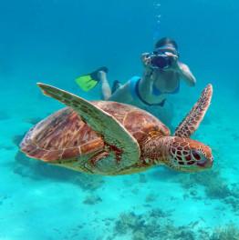 4-Hour Snorkelling Tour Of El Meco