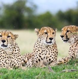 Savour a Safari in Kenya