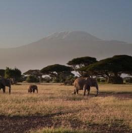 The royal court of Mount Kilimanjaro