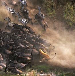 Head out for a Mini-Kenyan Safari