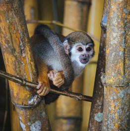 Explore the Amazon Rain Forest