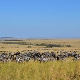 Masai Mara - The Great Migration