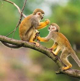 2-Day Jungle Expedition & Monkey Island Tour from Iquitos