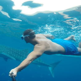 Get up close with the whale sharks
