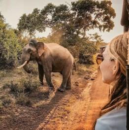 4 hour jeep safari tour to Udawalawe national park