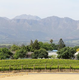 Explore majestic mountains and bountiful vineyards in Cape Winelands