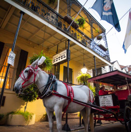 Ride an Elegant French Quarter Carriage