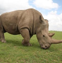 Nairobi National Park & Ol Pejeta Conservancy 3-Day Tour