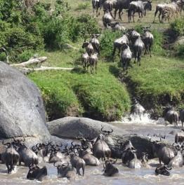 3 days maasai mara budget safari