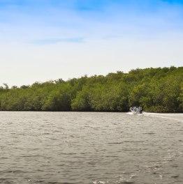 Observación de aves acuáticas entre bosques de manglares