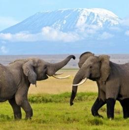 Peek into the world of African elephants