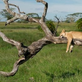 Wander through Famous Game Reserves & National Parks