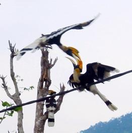 Go Birding in Bhutan