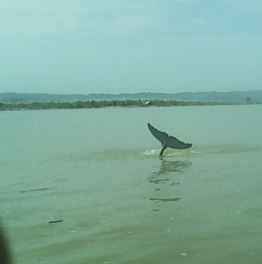 8-Hour Min Kun Dolphin Watching Tour From Mandalay