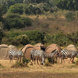 4-Day Tarangire, Serengeti and Ngorongoro Crater Tour