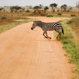 3-Day Amboseli & Tsavo East Wildlife Safari