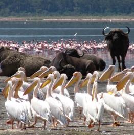 Jump on a whirlwind Kenyan Safari