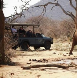 8-Hour Madikwe Game Reserve Safari From Botswana