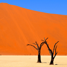 Explore with rock arts, canyons & Namib desert plains!