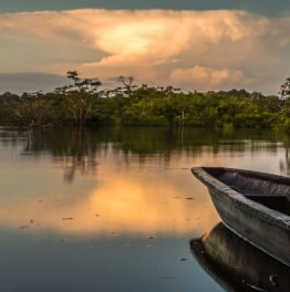 Check out the fantastic Peruvian Amazon forest