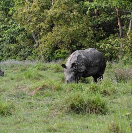 Traverse the lush green Nepalese forests on elephant back Safari