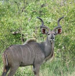 Spot rare wildlife & watch exotic birds
