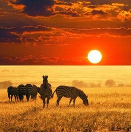 Schedule Affordable Day Safaris