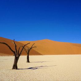 Safari through starkly diverse landscapes