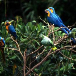 Spot endemic & migratory birds at Peruvian Reserve