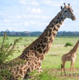 Book a Weekend Safari in Salt Lick