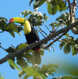 6-Hours Birdwatching at Sian Ka