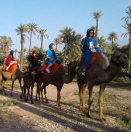 Ride Camels in the Palm Grove