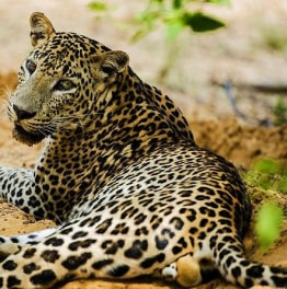 Go on a Thrilling Evening Safari Adventure