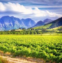 8-Hour Franschhoek & Stellenbosch Wine Tasting Tour