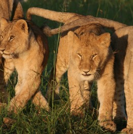 Care for African Wildlife Viewing