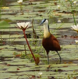 Spot Wildlife Amidst National Parks & Lakes
